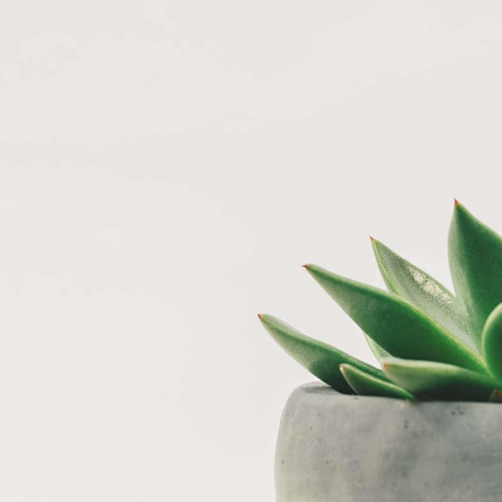 Zen Stories For A Calm, Clear & Open Mind